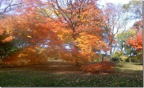 Central_Park_Fall